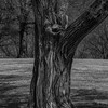 tree_detail-wdsm-27mar15-12x18-203bw-2265