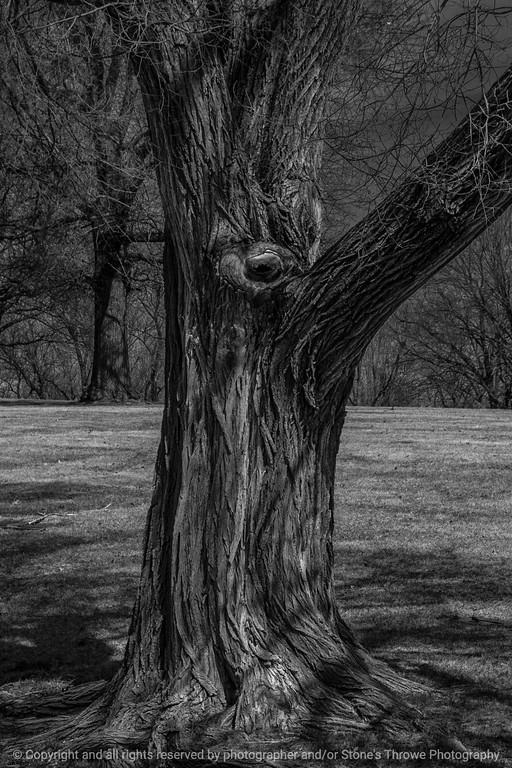 tree_detail-wdsm-27mar15-12x18-203bw-2265