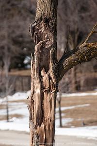 015-tree_detail-wdsm-14feb15-12x18-003-2354