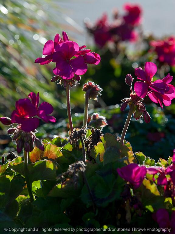 015-flower-wdsm-25oct14-09x12-001-0274