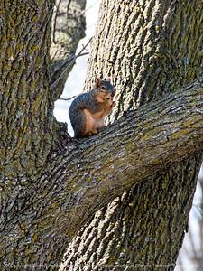 squirrel-wdsm-27mar15-09x12-001-2296