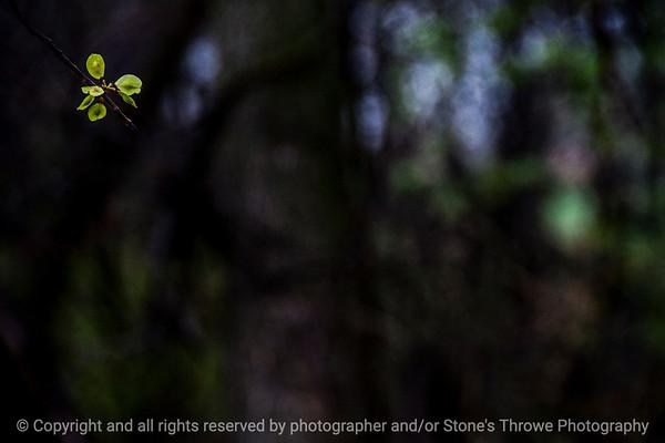015-seeds_tree-wdsm-29apr14-003-7317