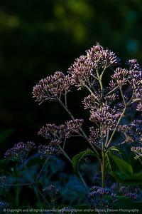 015-botanical-wdsm-06jul16-12x18-004-0160