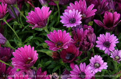 015-flower-wdsm-21apr06-2369