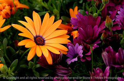 015-flower-wdsm-21apr06-c1-2338