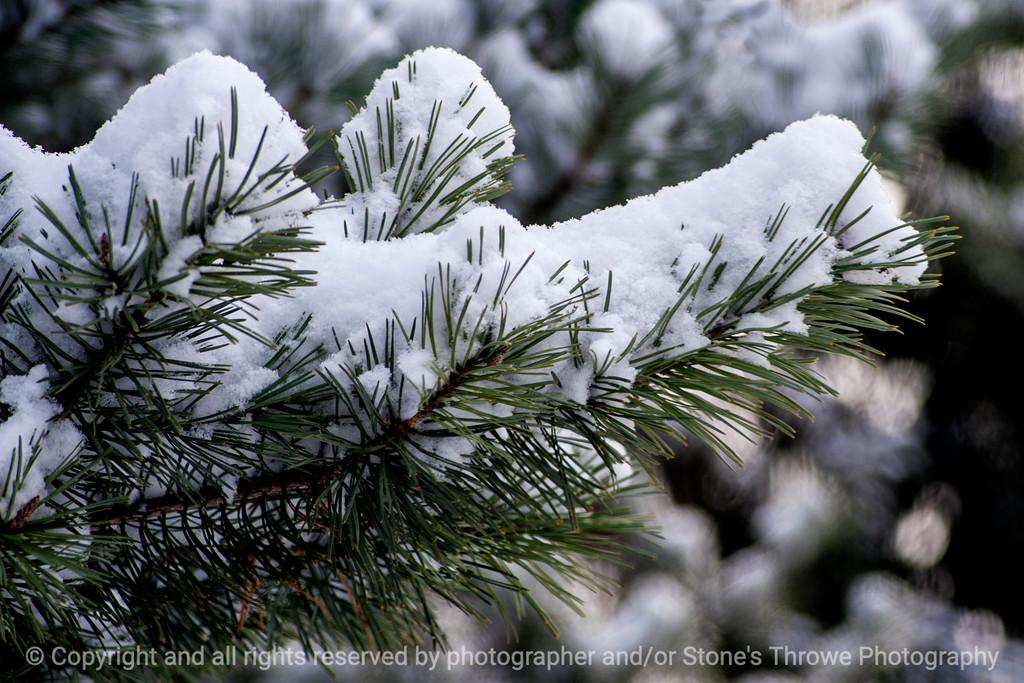 015-pine_branch-wdsm-06jan15-18x12-203-1334