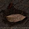 leaf-wdsm-21oct15-18x12-003-5663