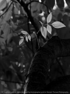 015-leaf-wdsm-08jul16-09x12-001-bw-0195
