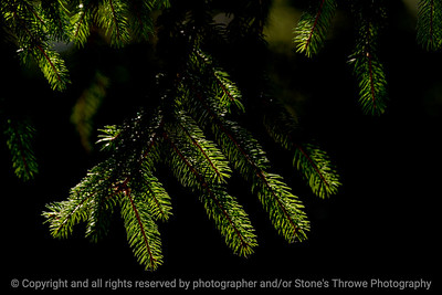 015-pine_needles-wdsm-20sep16-18x12-003-5860