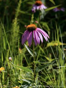 015-flower-wdsm-09jul16-12x16-001-4702