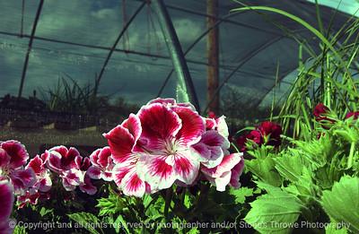 015-flower-wdsm-21apr06-2332