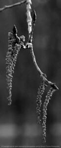 015-botanical-wdsm-09apr07-c1-bw-0453