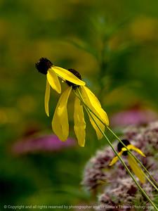 015-flower-wdsm-24jul16-09x12-001-4905