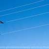 015-power_lines-wdsm-07oct13-003-4876