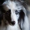 015-dog-wdsm-06aug10-6879