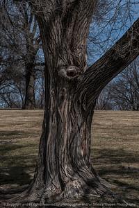 015-tree_detail-wdsm-27mar15-12x18-203-2265