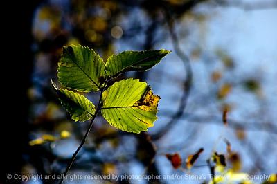 015-leaf_autumn-wdsm-21oct10-8561