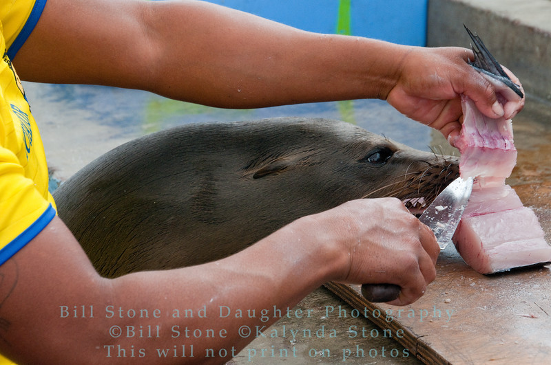 Fish Stall-Puerto Ayora-Galapagos 4