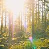 Sen eftermiddag i skogen