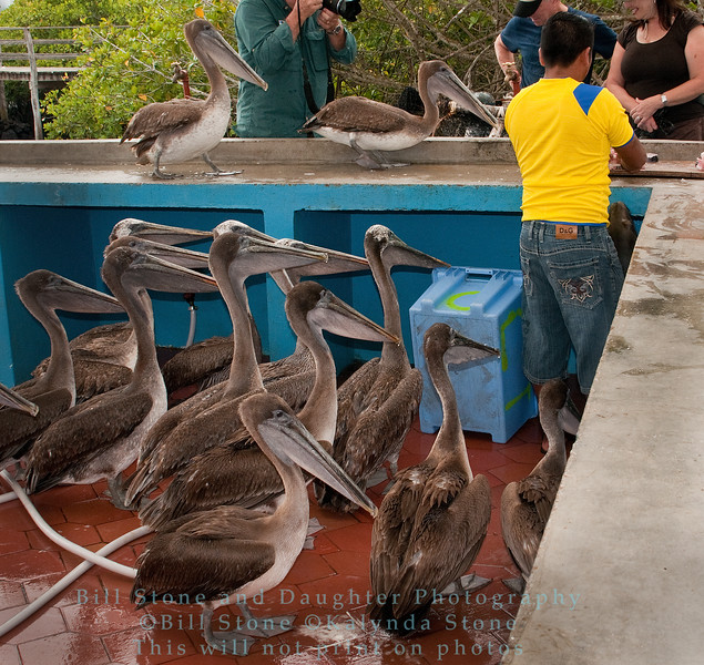 Fish Stall-Puerto Ayora-Galapagos 2