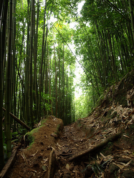 Bamboo Trail.
