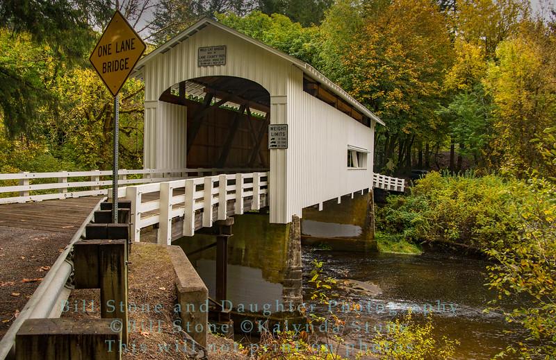 Wild Cat Bridge - Siuslaw Road (Austra) Oregon