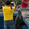Fish Stall-Puerto Ayora-Galapagos 3