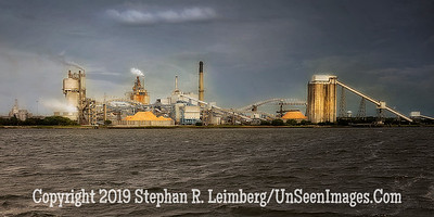 Paper Plant from Sea - Copyright 2015 Steve Leimberg - UnSeenImages Com _Z2A1764