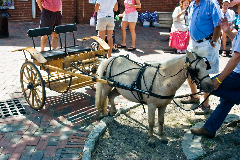Miniature Horse and Buggy-Newbury Port