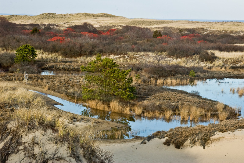Vernal pools and Dunes.
