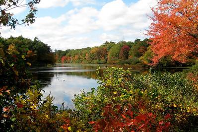 Fall Swans 2