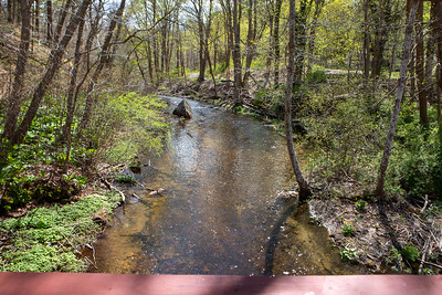 Town Brook Trail-2115
