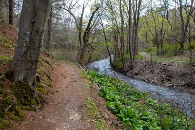 Town Brook Trail-2132