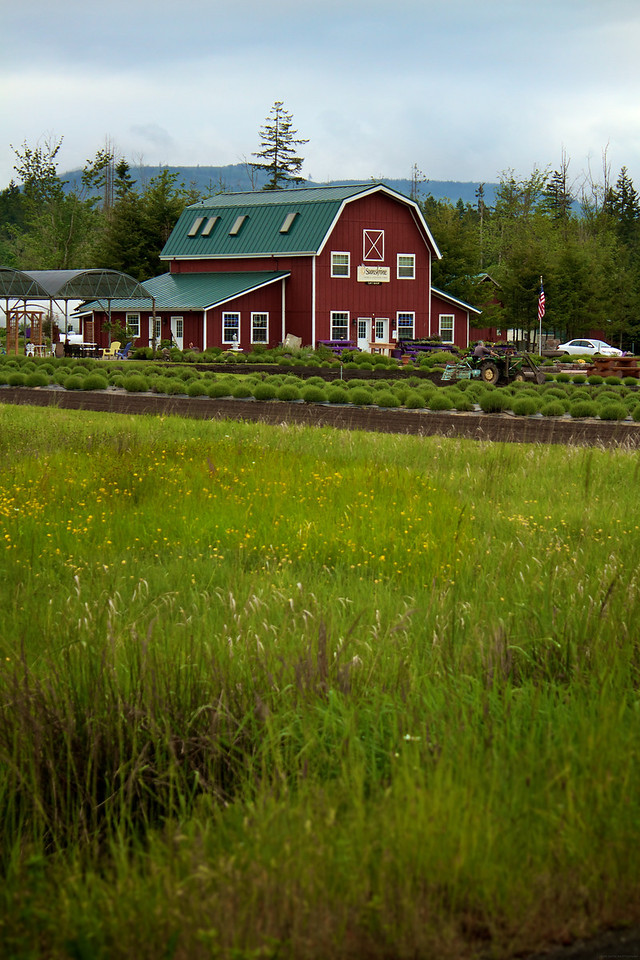 This is the Sunshine Herb and Lavender farm. This was right off the main HWY on our way to Port Townsend.