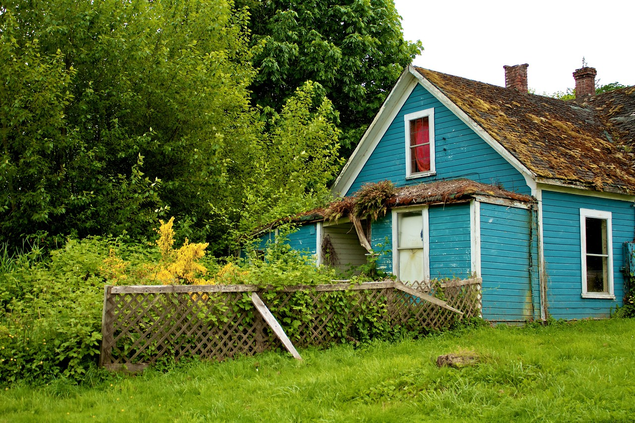 This was an interesting and colorful house right next to a gas station in town. Love all the moss living on the roof. The bright yellow shrub is actually a weed called Scotch Broom. It has infested this part of Washington state and dots the countryside with flashes of brilliant gold.