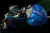 Tortoise beetle mother guarding larvae under UV light