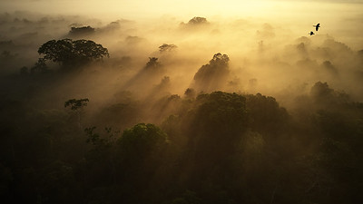 Ecuadorian Amazon at sunrise