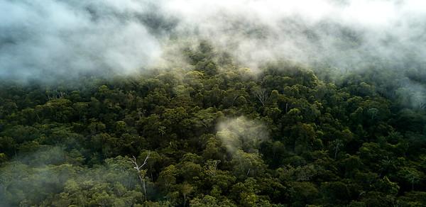 Mists rising over Amacayacu National Park