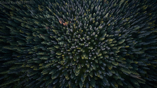 Forest diversity
