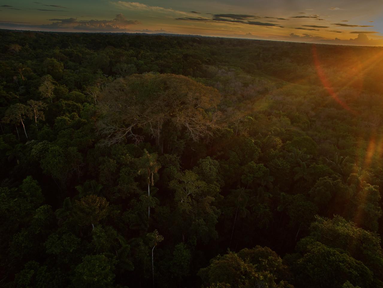 Sunrise over Yasuni national park