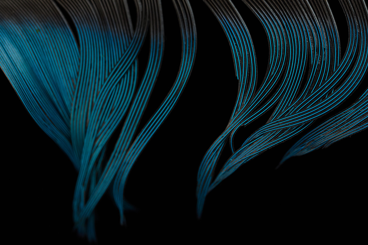 Blue feather detail