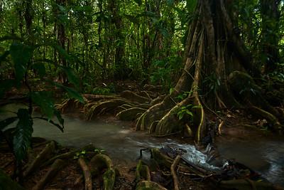Mangrove at high tide