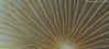 Mushroom lamellae