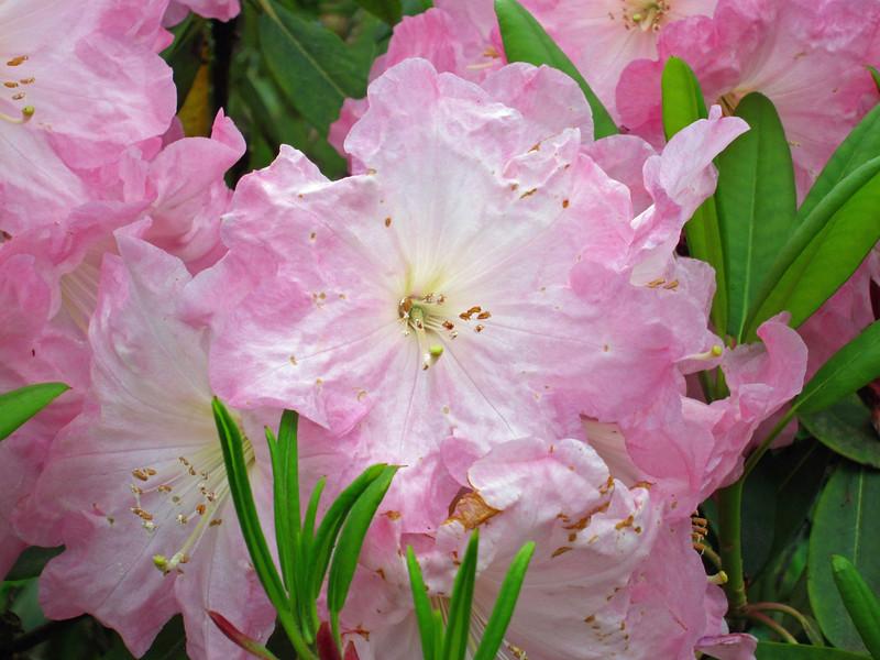 1590 Crystal Springs Rhododendron Garden