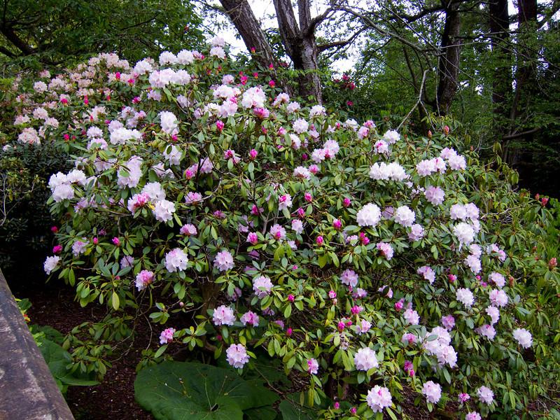 1574 Crystal Springs Rhododendron Garden