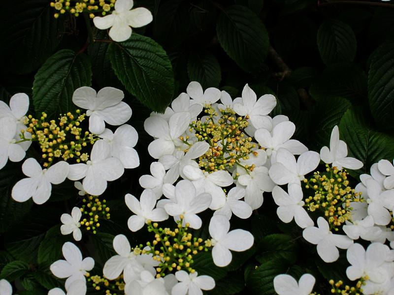 1603 Crystal Springs Rhododendron Garden