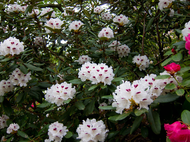 1575 Crystal Springs Rhododendron Garden