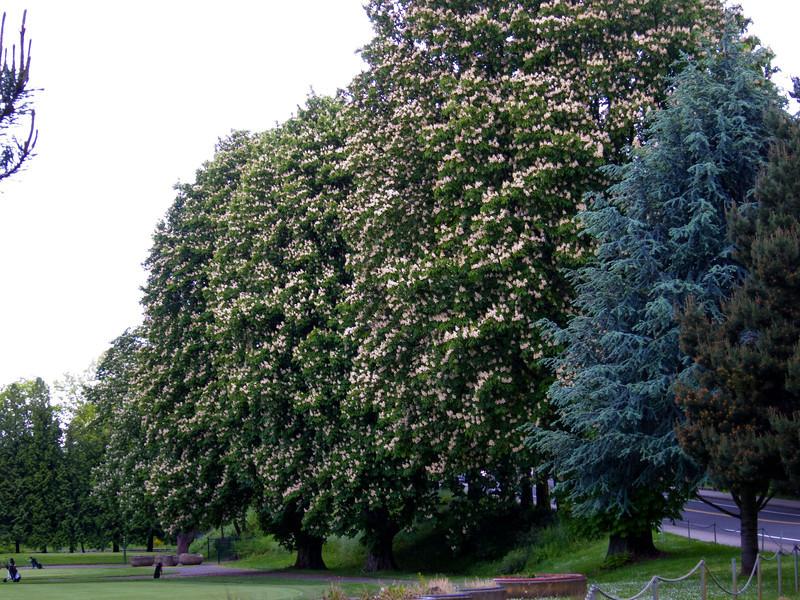 1569 Chestnut Trees