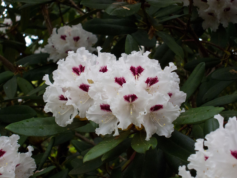 1577 Crystal Springs Rhododendron Garden
