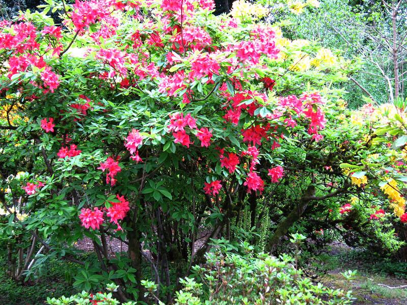 1586 Crystal Springs Rhododendron Garden